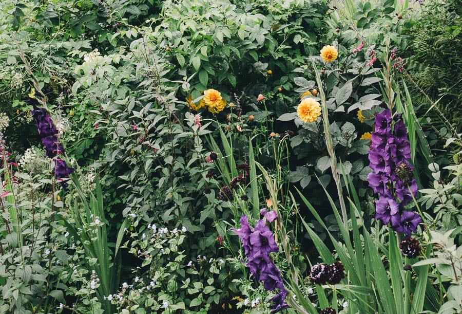 Purple and orange flowers in flowerbed