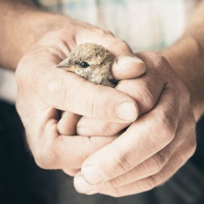 Rescued sparrow