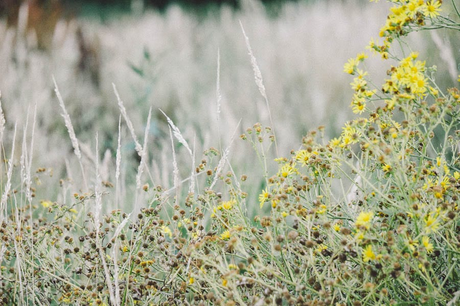 Wild flowers and grass