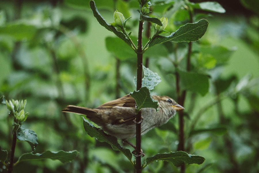 Bird in hedgerow