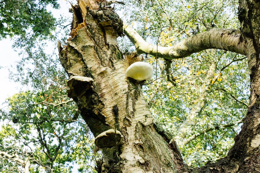 Fungi on tree trunk