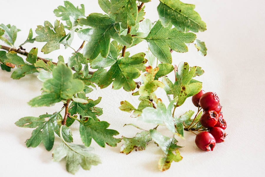 Hawthorn berries on white plate