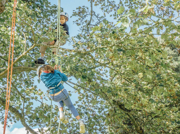 Ropes and kids in tree