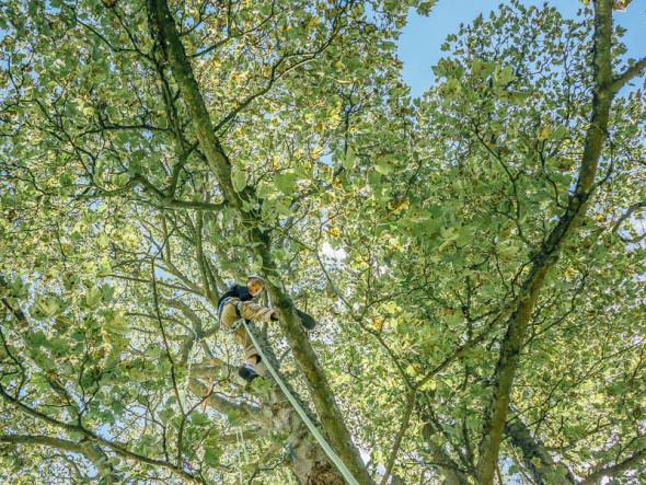 Theo tree climbing