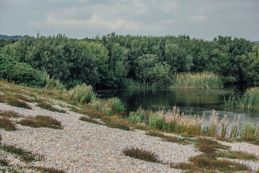 Shingle and pond RSPB Dungeness
