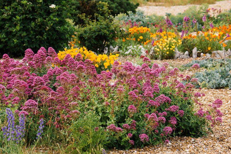 Derek Jarmans Garden flower bed