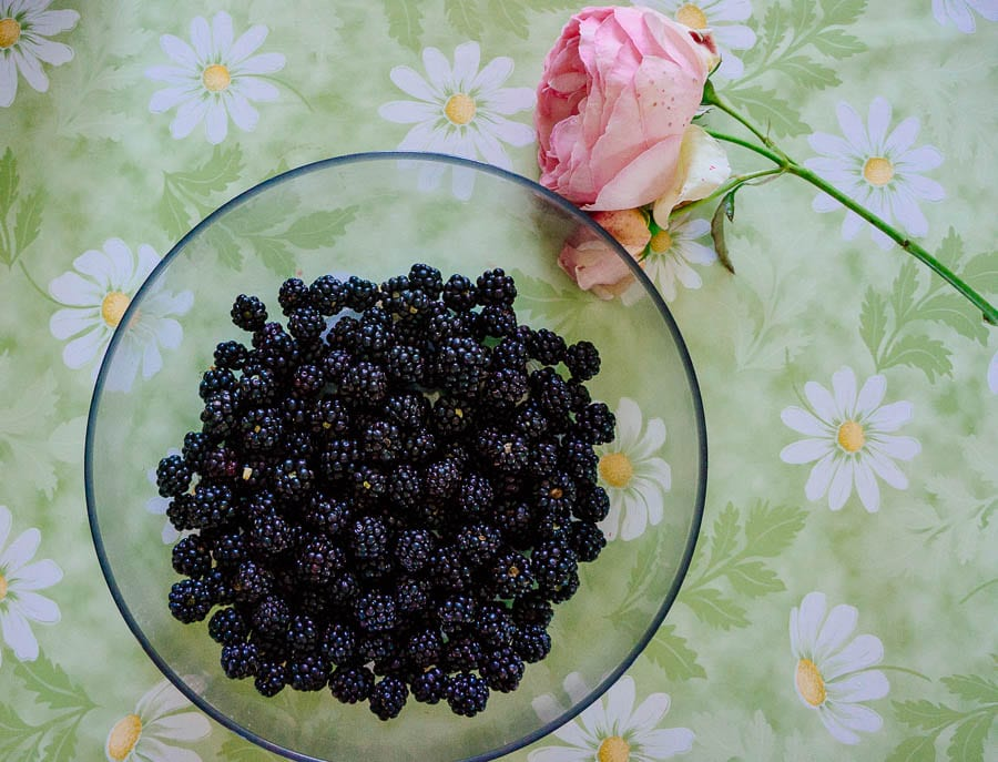 Pink rose and blackberries on table
