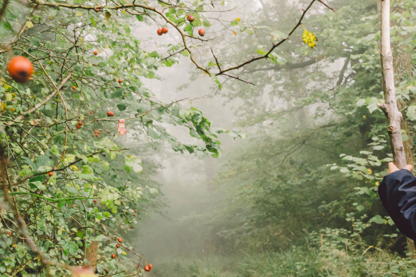 Rosehips and misty path