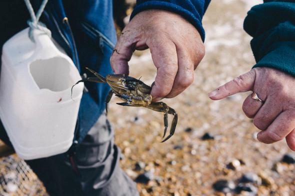 Shrimping in Kent showing crab