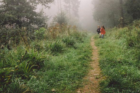 Walk in mist in woods
