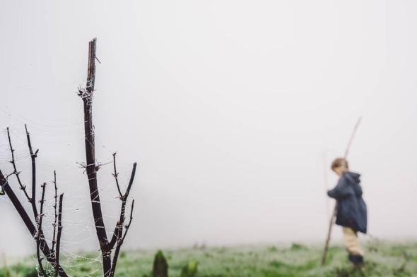 Walk in the mist spider web