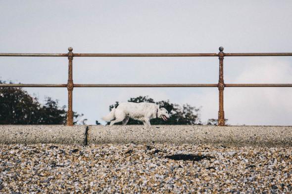 Wet dog by beach