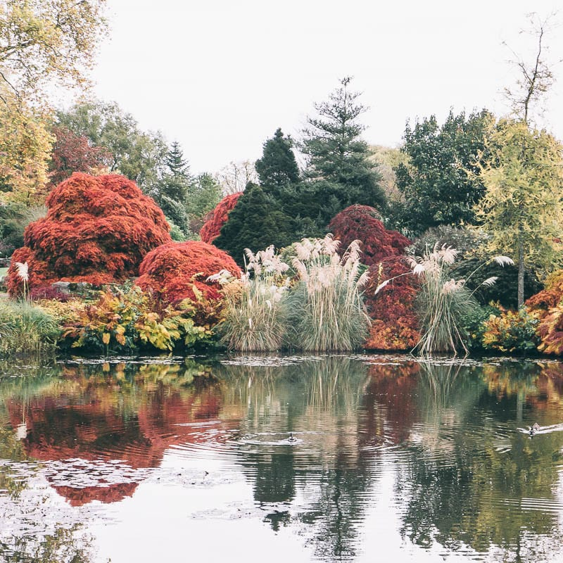 Autumn reflections Wakehurst pond