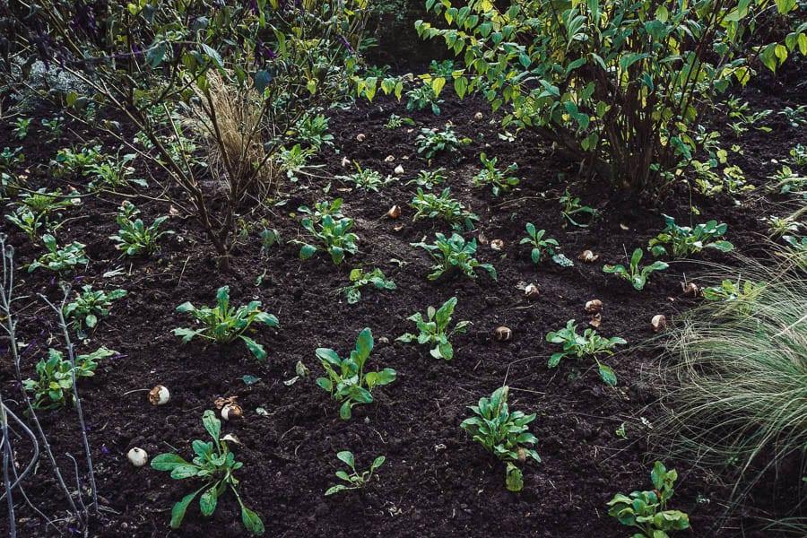 Wreath workshop Gravetye Manor planting bulbs