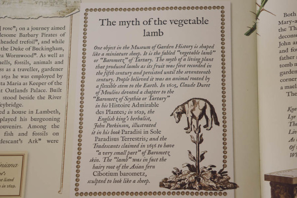 The Plant Hunters Myth of the Vegetable Lamb
