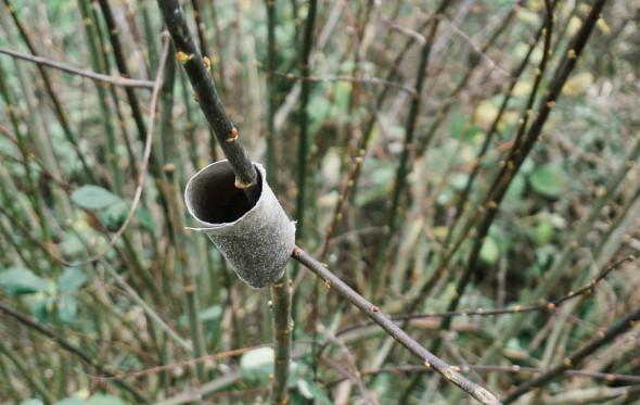Winter bird feeding toilet roll finished
