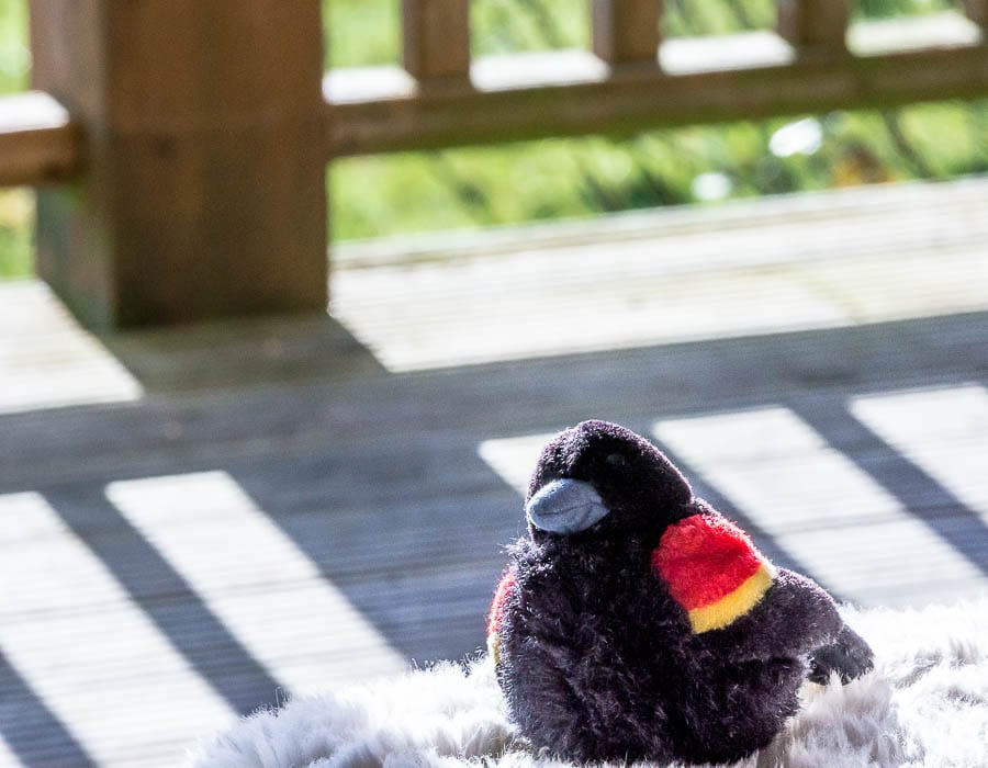 Kids bird watching red wing blackbird plush toy