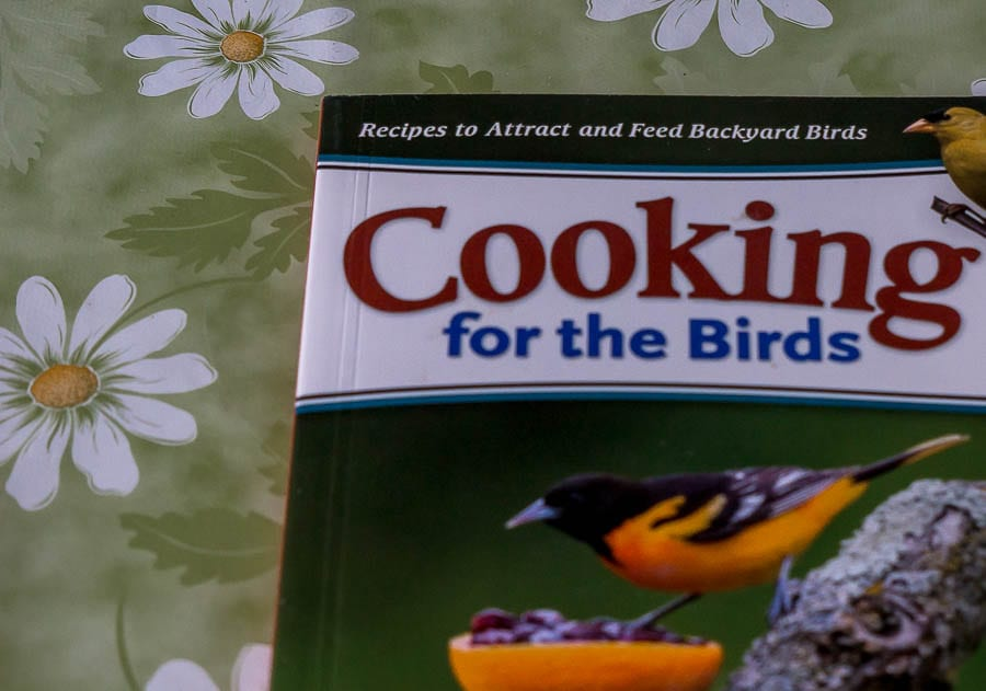 Kids bird watching Cooking for the Birds
