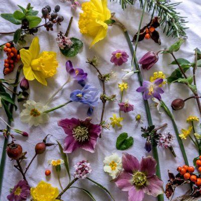 Flower Joy and Instagram