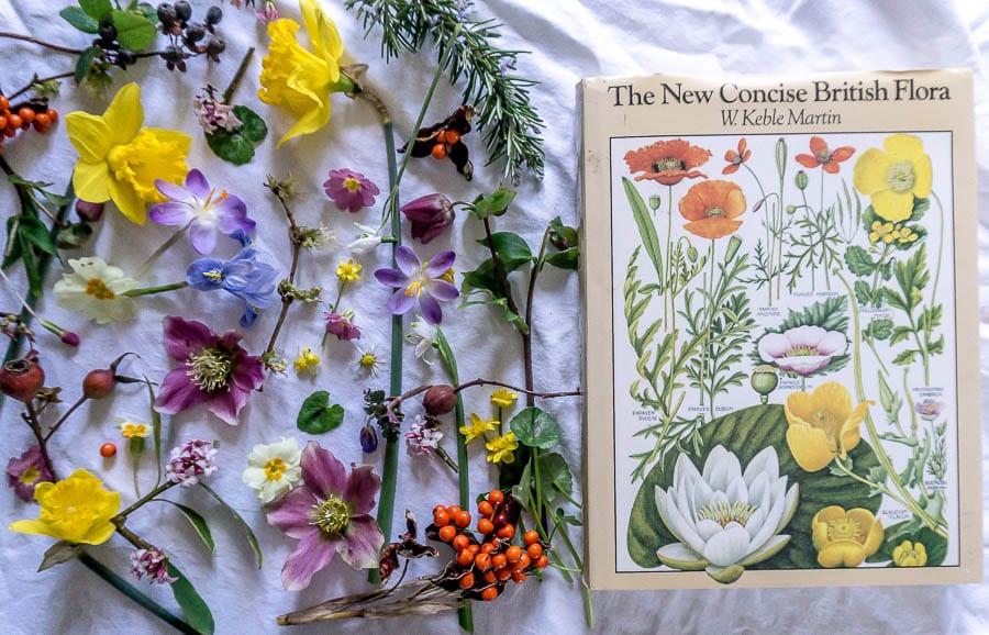Flower Joy The New Concise British Flora