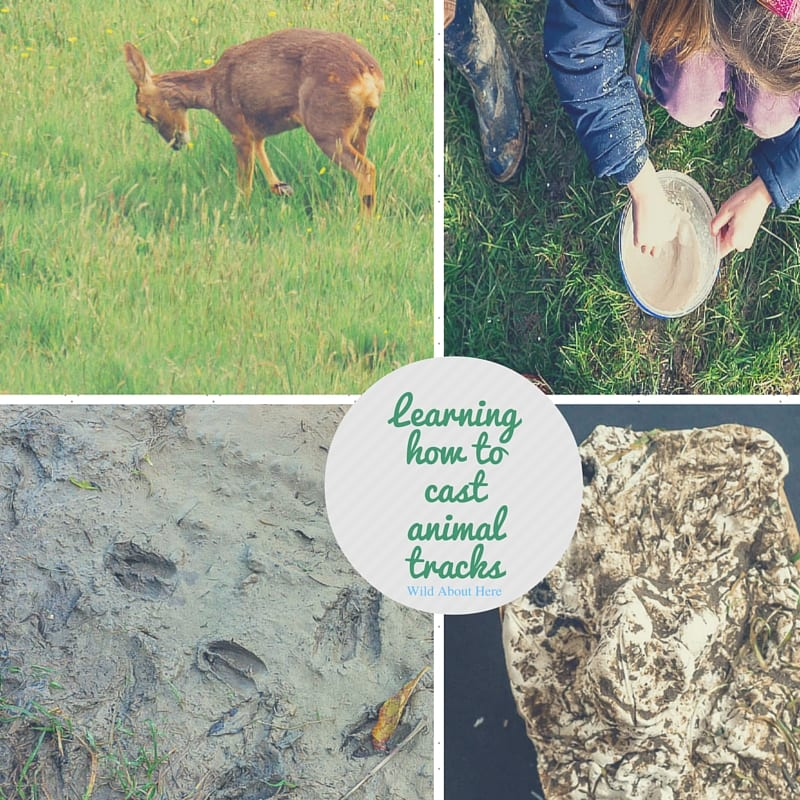 Learning how to cast animal tracks