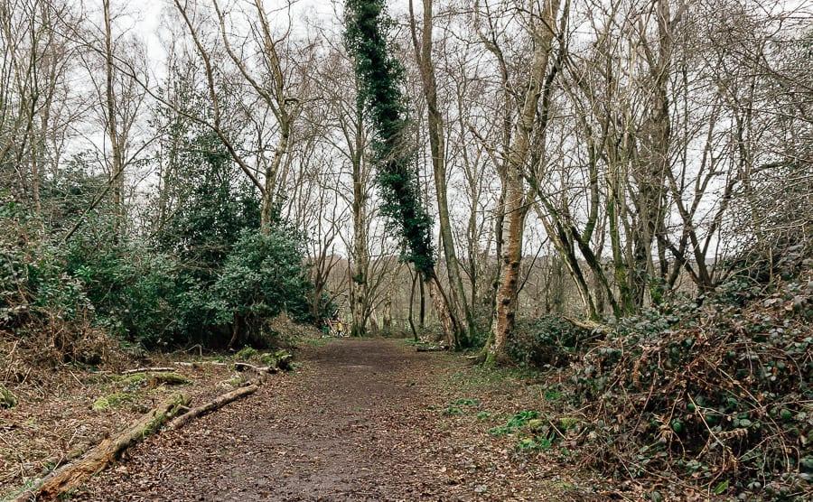 Natural playground Sheffield Park Nature Trail