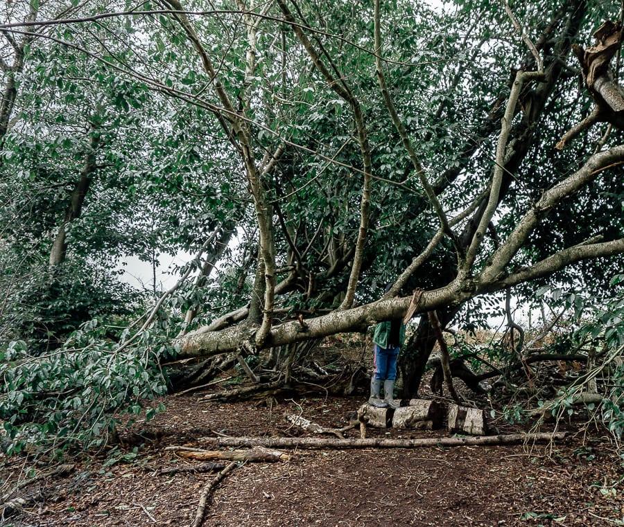 Natural playground Tree climbing