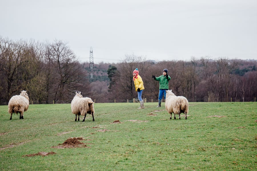 Natural playground children and sheep in field
