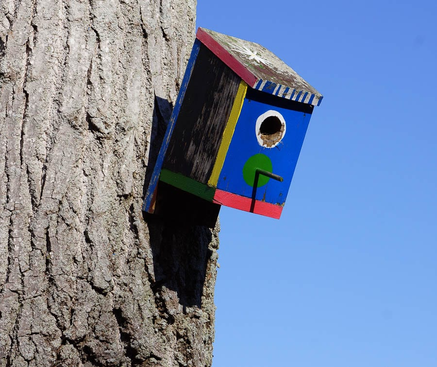 Painted bird box on tree