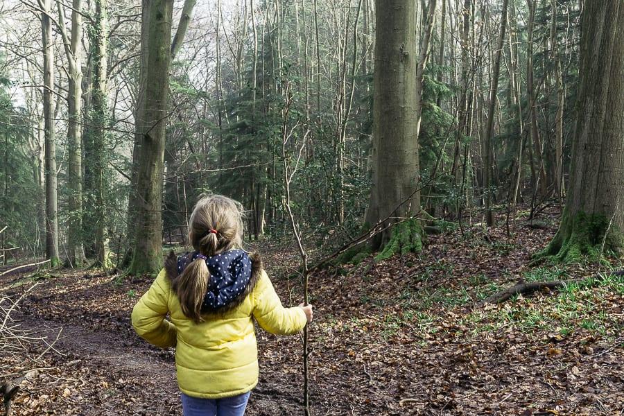 Big Bluebell Watch ancient woodlands
