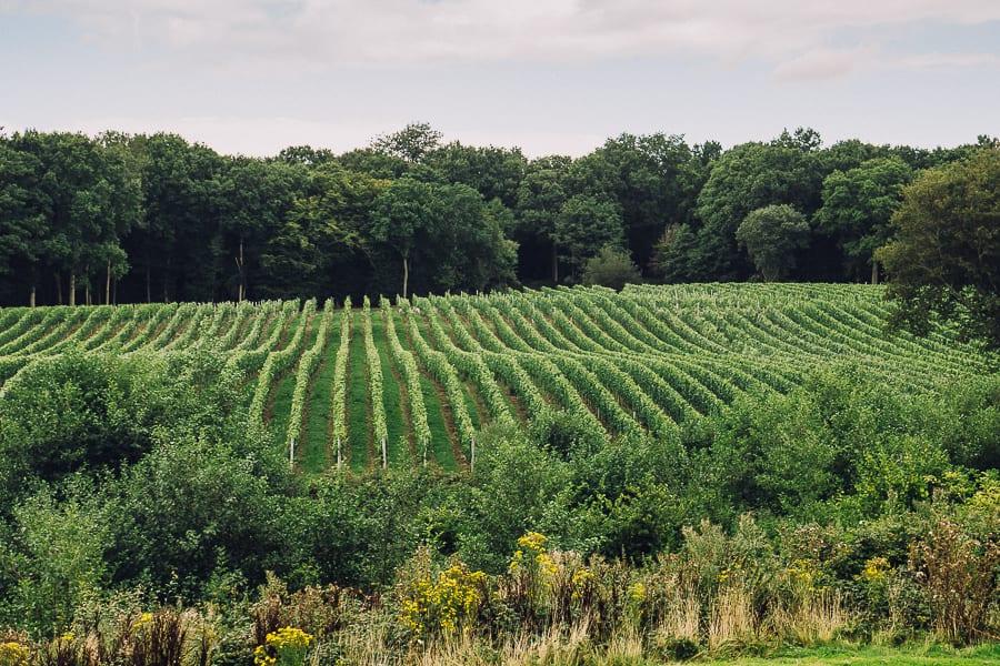 Bluebell vineyard East Sussex England