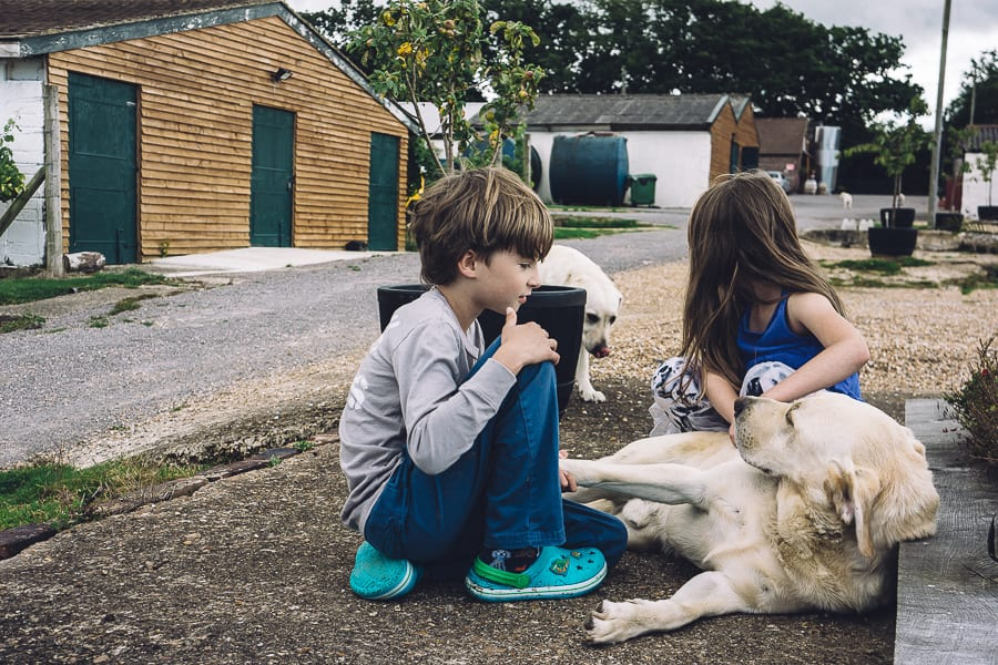 Bluebell vineyard labradors and kids