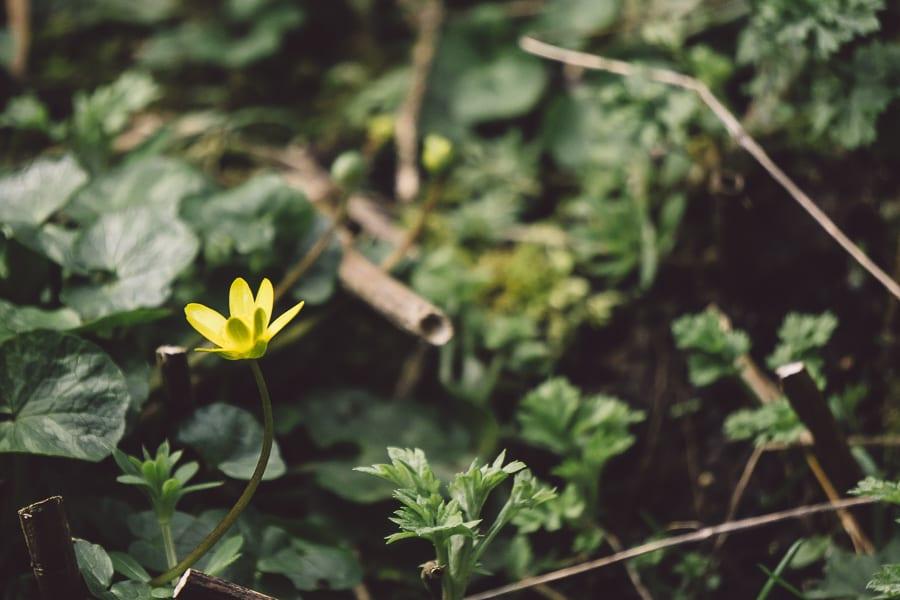 March Flower in garden