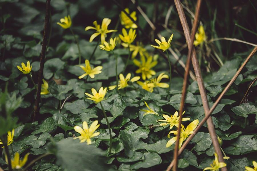 March Flowers in garden