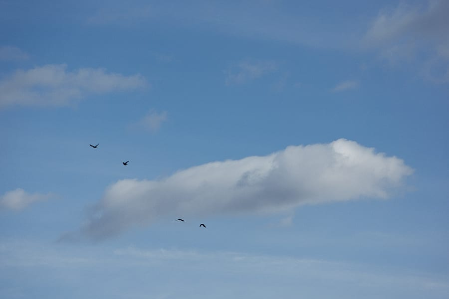Jackdaws and clouds