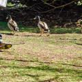 Sheffield Park Easter Egg Hunt ducks