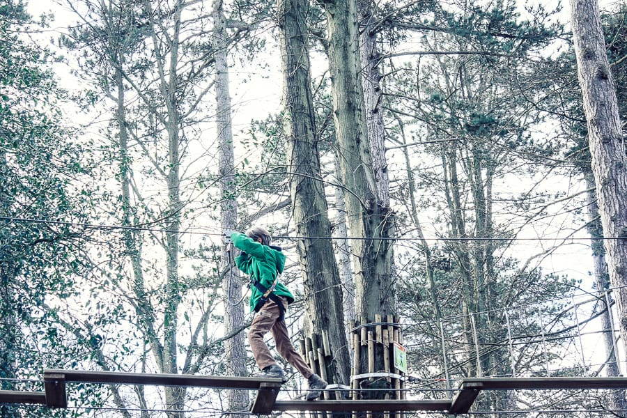 Treetop adventure crossing and trees