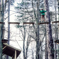 Treetop adventure with children