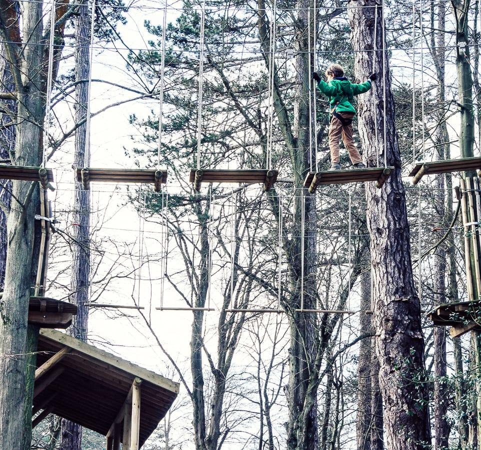 Treetop adventure with children