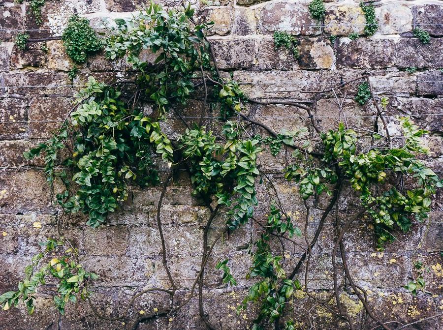 Wakehurst wall with plant trellis