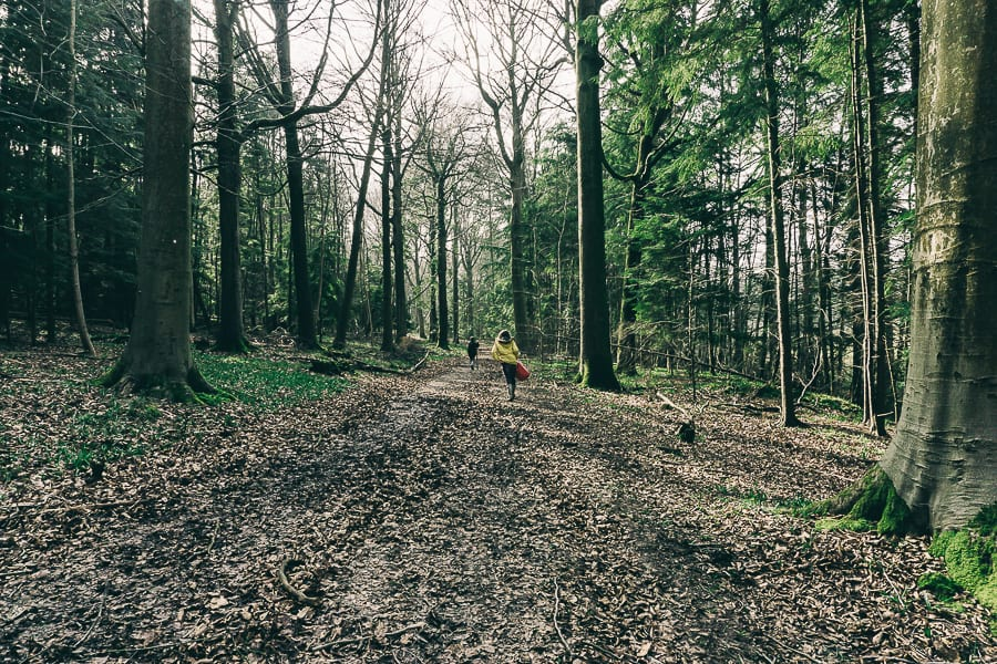 Woods Picnic path