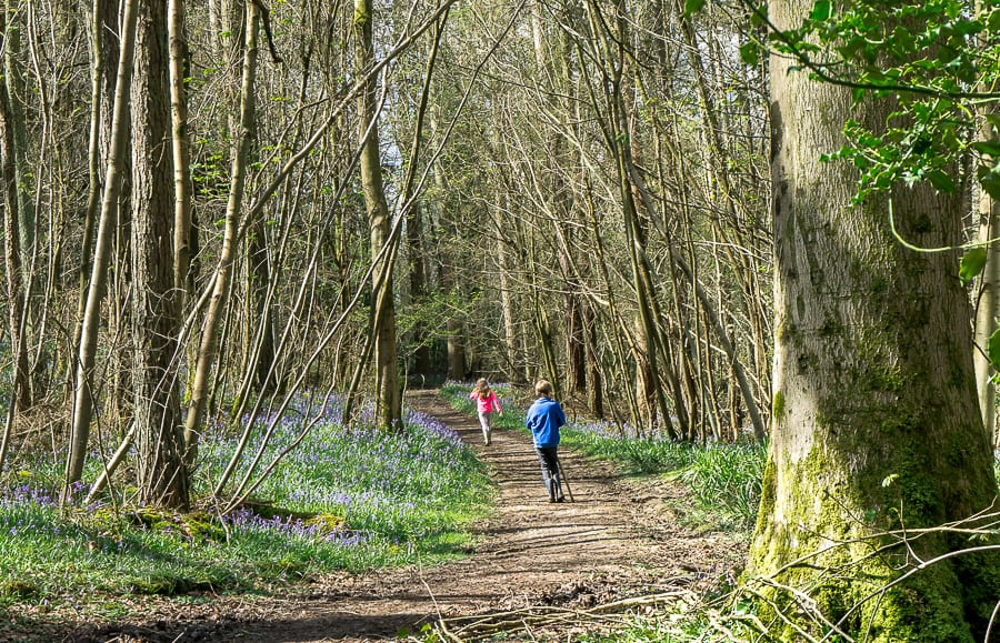 Bluebell path and kids