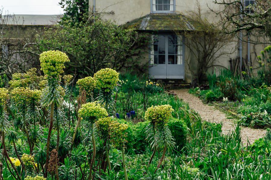 Charleston walled garden flowers and door
