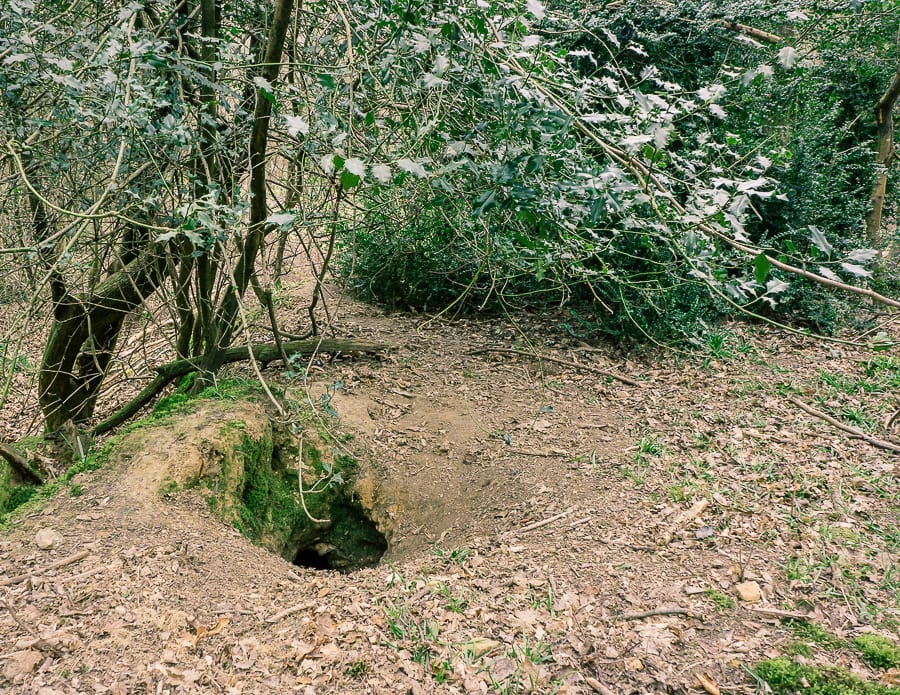 Follow a badger path to sett entrance