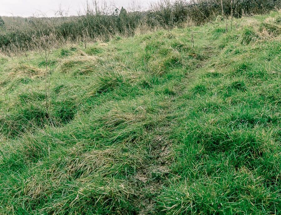 Follow badger path as nature detectives