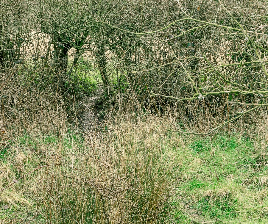 Follow badger path under hedge