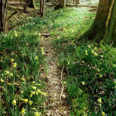 Follow a badger path