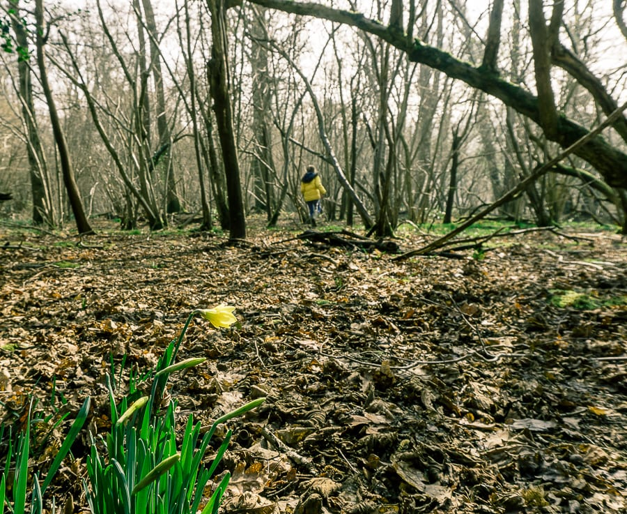 Follow badger path with kids in woods