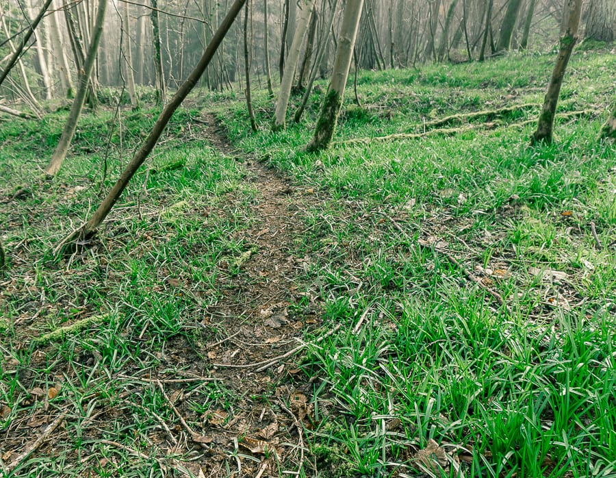 Follow badger path woods