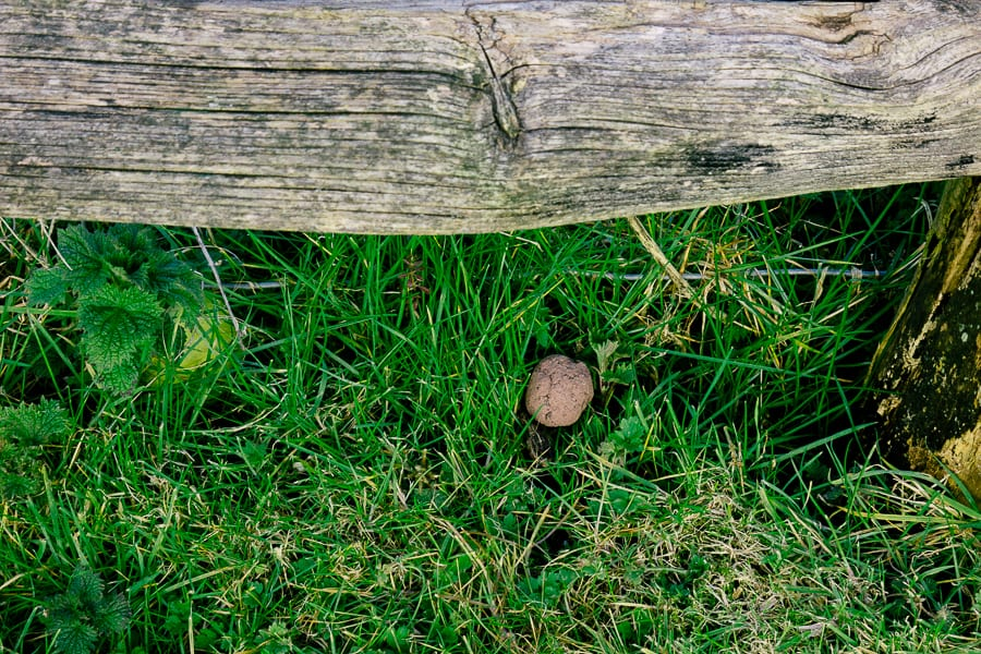 Make a wildflower seed bomb under a fence